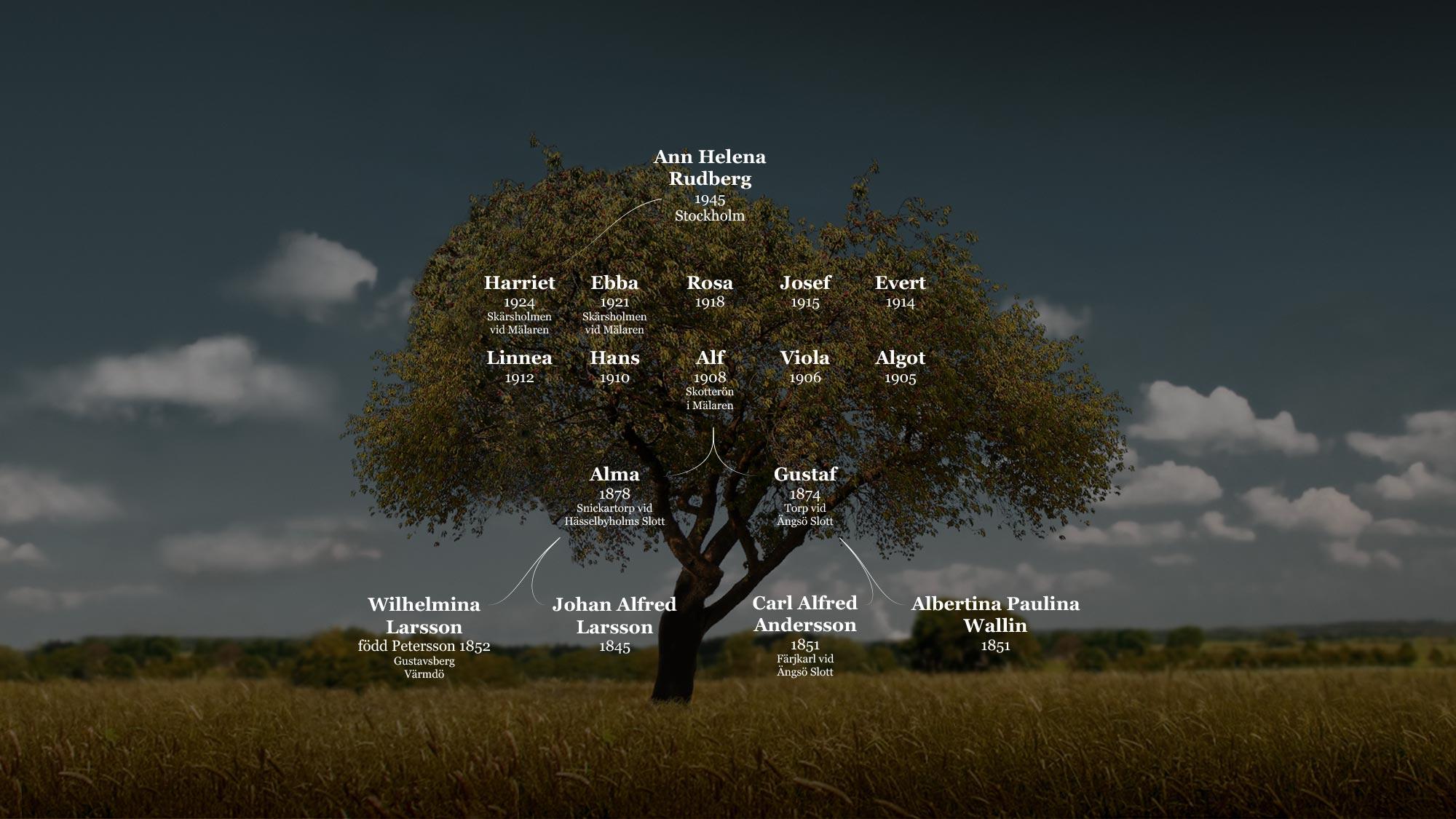 Släktträdet